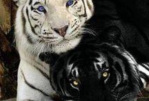 Animals / Animais / Animais; natureza