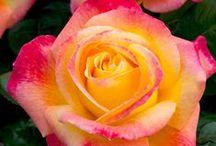 Fleurs, Floral
