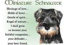 Schnauzer, maybe... yes I have!!