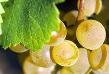 Patrone / Per Elena ed Enzo Patrone, gli aromi e i gusti unici dei loro vini hanno il sapore intenso di una sfida vinta.  Su Excantia potete gustare due delle etichette prodotte dall'Azienda Agricola Patrone: il Langhe Chardonnay e il più tradizionale Dolcetto d'Alba.
