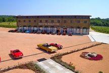 Tenuta Roletto / Tra le verdi colline moreniche del Canavese, nel nord del Piemonte, la Tenuta Roletto da anni si adopera per la produzione dell'Erbaluce DOCG. Scoprila su Excantia: www.excantia.com/produttori/tenuta-roletto