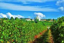 """Biondelli / In una cascina cinquecentesca, nel cuore delle cosiddette """"Franchae Curtes"""", la famiglia Biondelli unisce indissolubilmente la sua storia alla tradizione della Franciacorta e dei suoi vini.  www.excantia.com/biondelli"""