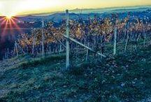 I Produttori #madeinItaly / Crediamo nel made in Italy e nella bellezza che ogni territorio, ogni regione sa darci: ecco da dove vengono i produttori di vino e birra artigianale che trovate su Excantia.