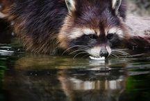 Nature / Wild Animals / Favorite pictures of nature. Wild and cute <3 // Suosikki kuvia luonnosta. Villiä ja suloista <3