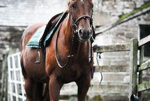 Equestrian & Horses / Who doesn't love horses? I'm an equestrian so... // Kuka ei rakastaisi hevosia? Olen ratsastaja niin...