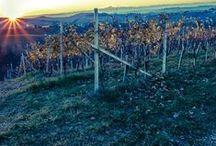 Ressia / Dal Piemonte, Ressia: una piccola azienda a conduzione familiare, fatta di persone che lavorano con impegno e attenzione per produrre vini di eccellenza.