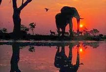 Elephants / Elephants are the best animal in the world