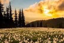~Washington National Parks~ / Explore the amazing National Parks of Washington -- Mount Rainier, North Cascades, and Olympic!!