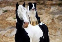 Horses and Friends / Horses are social animals - they love a buddy!