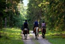 Happy Trails / There's nothing like headin' out for a trail ride!