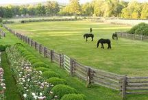 Green Pastures / Eye candy for the horse