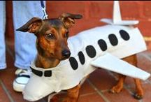 Pets and Planes ✈ / How cute!