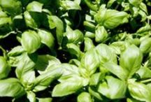 Herbs #repins / Herbs & gardening (tips and tricks).