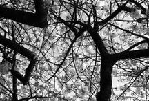 Captures / Si je ne peux prétendre être un grand photographe, considérez moi comme un amateur qui pratique avec sincérité et simplicité.  Voici quelques-uns de mes modestes clichés.