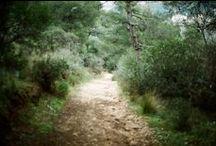 paths that i ride