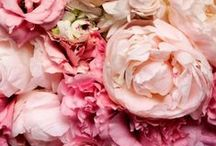 love pink roses / by e bouter