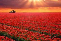 RED / Esprit Solentbay