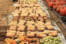Organic gardening, gardens & farms