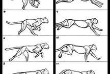 Animation / Tutoriaux et exemples d'animation 2D et 3D.