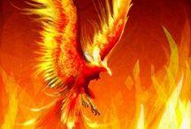 Tűz...Fire.. / Lángolás..