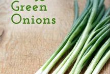 Green Onion Recipes / Celebrates recipes with green onions, scallions, spring onions