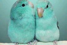Winged Beauties
