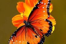 Butterflies - Mother Nature Moments / Butterflies