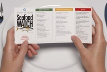 An Aquatic Appetite / Ocean themed food and sustainable seafood recipes.