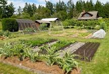 Vegetable garden / by lenna ka