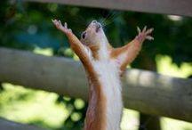 Squirrels & co
