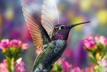 Hummingbirds / A collection of images featuring beautiful hummingbirds from around the world. CONTRIBUTE TO THIS BOARD! Simply follow the board and then either comment on one of the pin or send us an email explaining that you'd like to be a guest contributor. 01420 23986 www.robharvey.com rob@robharvey.com