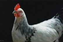 Haan/kip schilderijen / Rooster/chicken, The paintings displayed represent a selection of Klimas work.