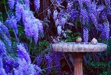 Gorgeous Garden / by Drea Kelley