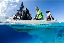 A diver's perspective / A collection of interesting sights & creatures through our diver's eyes.