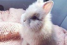 S w e e t : Lapin Fluffy / La tête so cute de mon futur lapin je l'espère ! Tout mignon et tout fou : lapin à tête de lion.