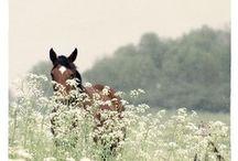 equestrian. / by miranda zoscak