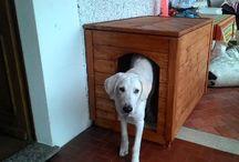 Cuccia in legno - dog  wood house / Fai da te cuccia per cane medio misure interne cm 100 x 65 x 75 h termoisolante cm 2,5