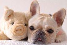 French Bulldog Love / by Alexandra Senycia