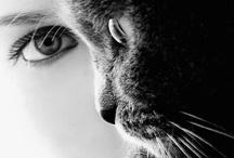 MACRO PHOTOGRAPHY / Extreme close-ups of amazing subject matters / by Jolisa Hume