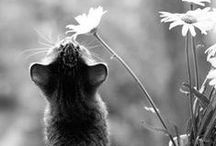 CATS / by Alexandra Senycia