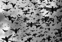 BATS (REAL) / by Sharon
