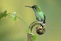 Reference | Birds