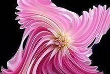 strainge beautiful flowers