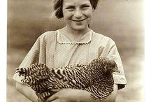 Chicken Cheekiness