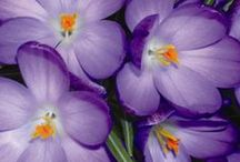 Spring colours / Springtime photos submitted by readers of North Somerset Life magazine