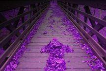 Life's Purple