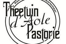 Theetuin d' Aole Pastorie. ☕️