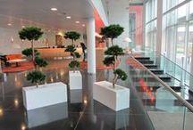 Kunstplanten / Kunstplanten