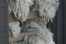 felt and wool / by Szofi B.
