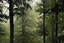 Vivacious Trees